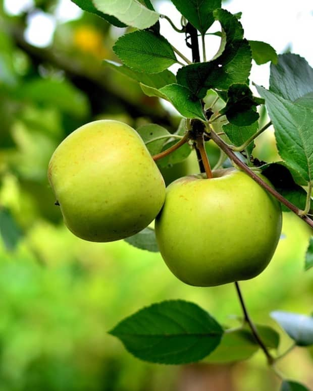 these-are-the-health-benefits-of-eating-green-apples