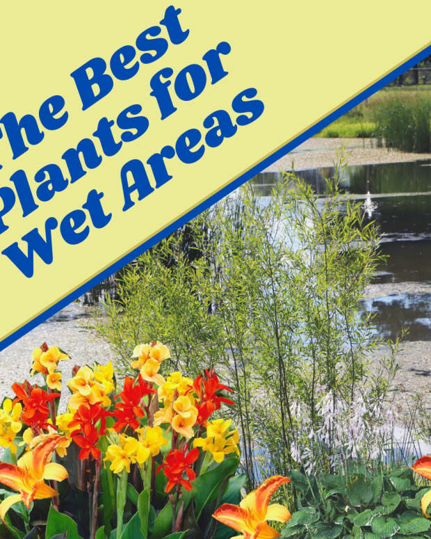 15-plants-that-like-wet-soil-plus-growing-tips-and-faqs