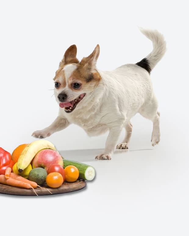 homemade-dog-food-recipes-for-allergies