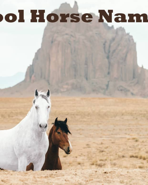 cool-horse-names