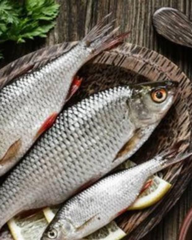 the-organic-fish