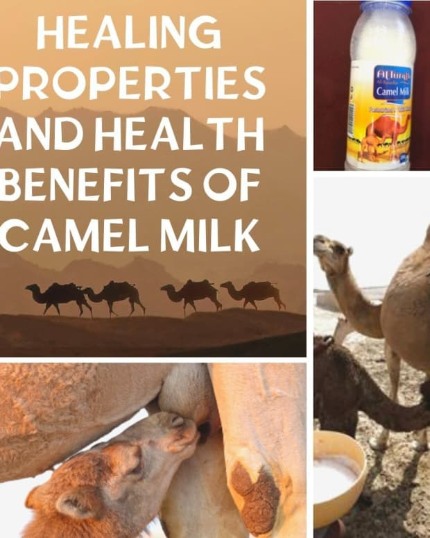 what-are-the-benefits-of-drinking-camel-milk