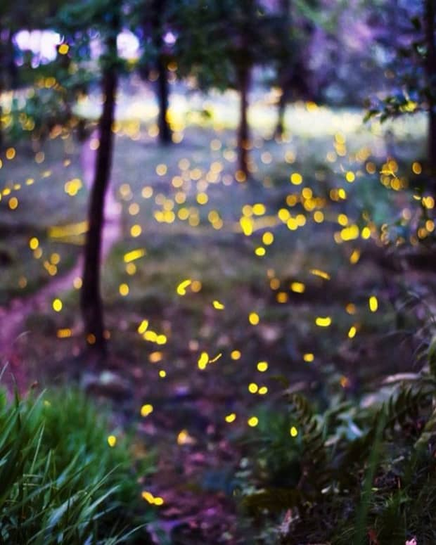 a-fated-meeting-in-a-secret-place-wildflowers-and-fireflies