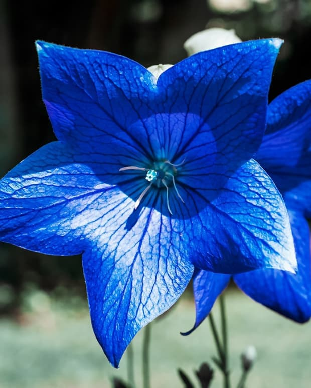 blue-a-poem