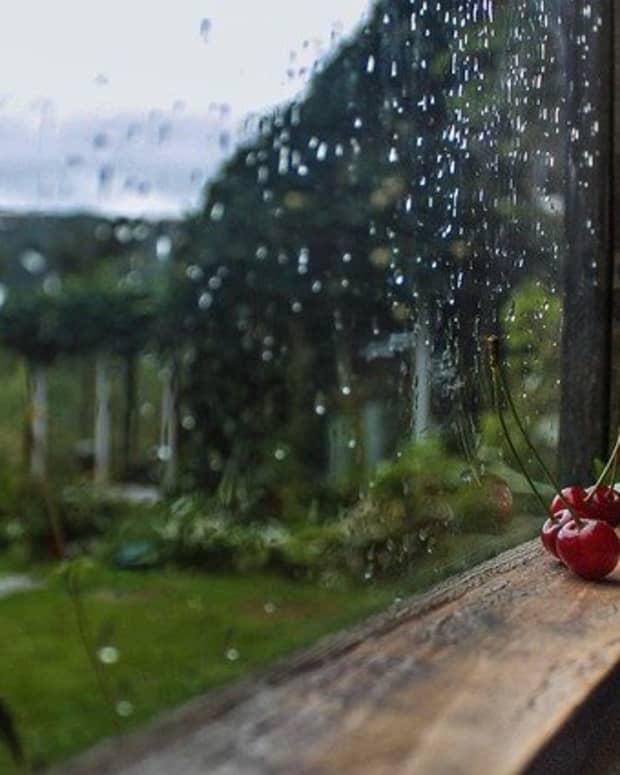 wildflowers-and-fireflies-part-3-the-inspiring-rain