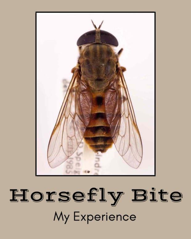 horsefly-bite