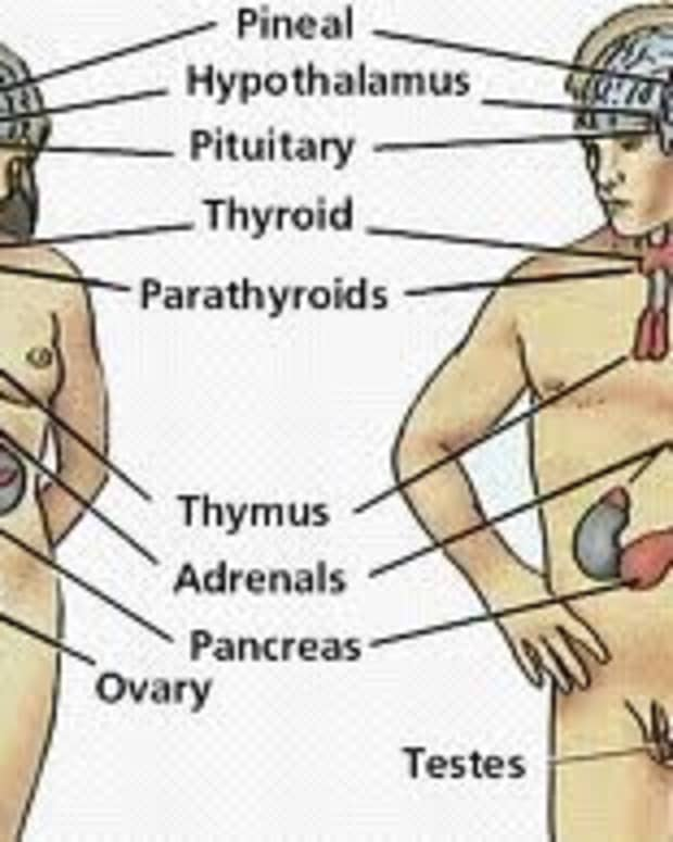 what-is-the-endocrine-system-learn-about-the-various-glands-and-the-hormones-they-release