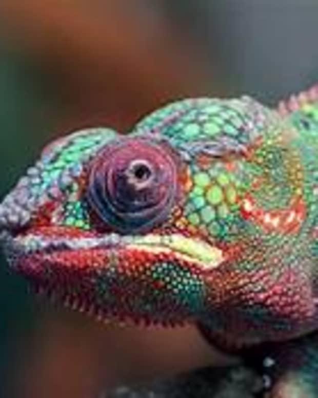 the-chameleon-a-short-story