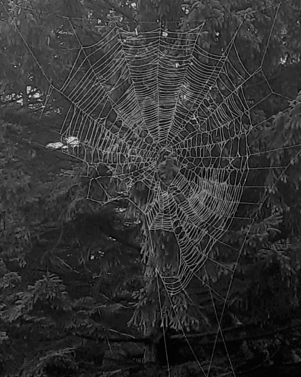 web-of-oneness