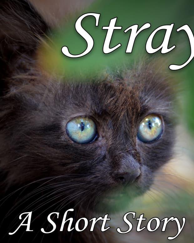 stray-a-short-story