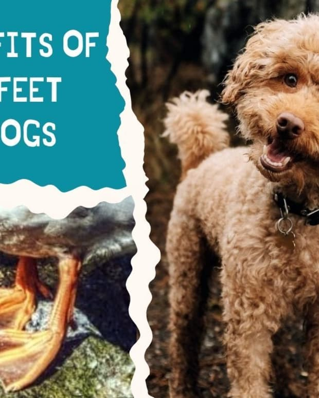 benefits-of-duck-feet-for-dogs