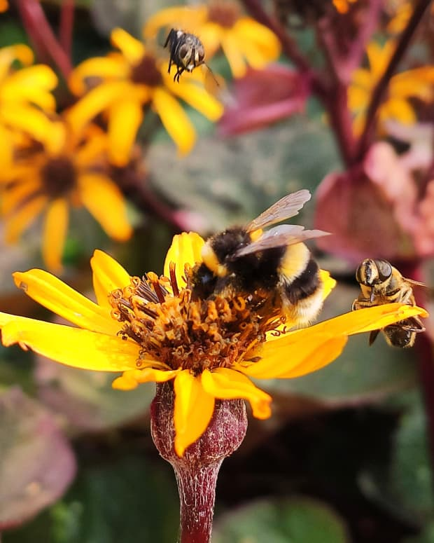 best-late-blooming-flowers-for-bees-and-butterflies