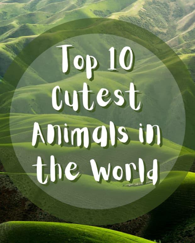 最美丽的动物词汇在这世界