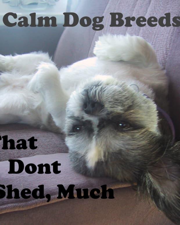 calm-non-shedding-dog-types