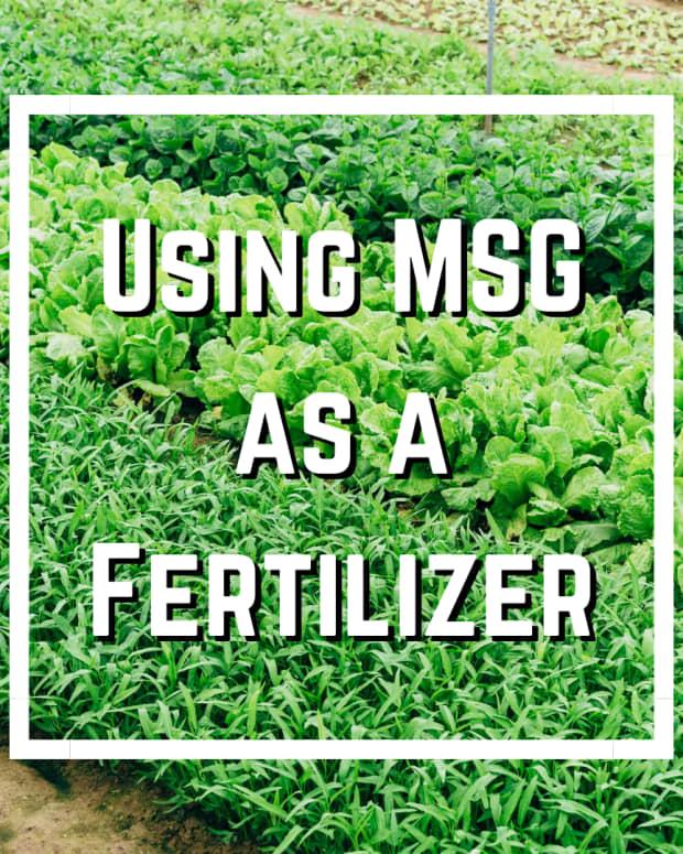 is-msg-ajinomoto-good-for-plants
