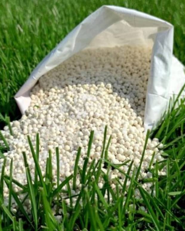4-reasons-to-avoid-over-fertilizing-your-lawn-and-garden