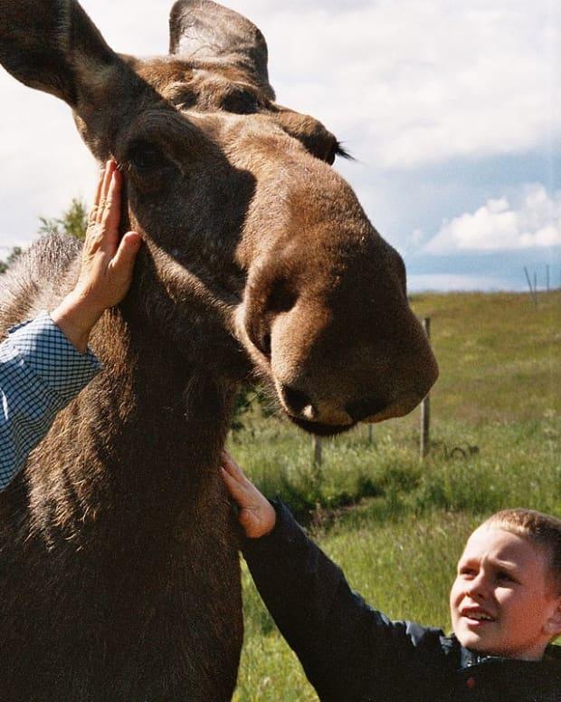 day-trips-from-stockholm-moose-park-uppsala-sweden