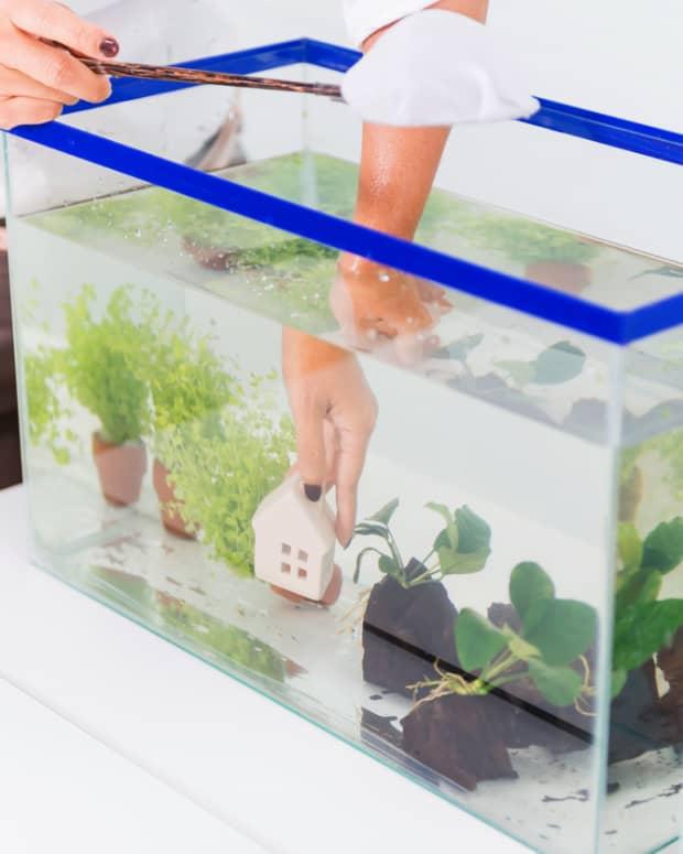 caring-for-your-aquarium-101