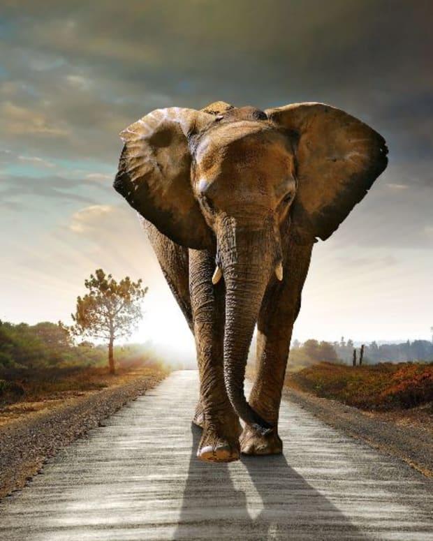 pbn-elephant