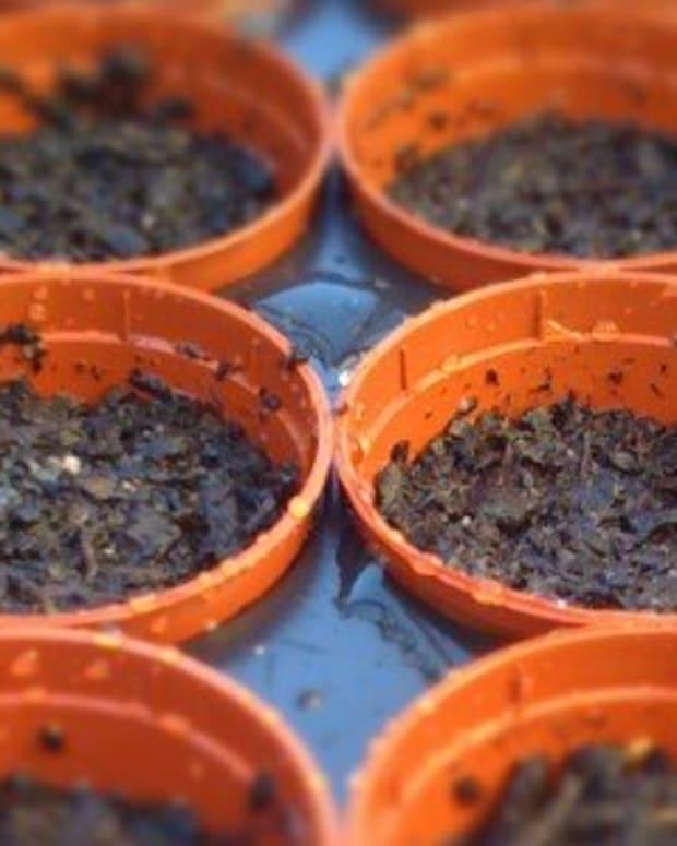 growing-bonsai