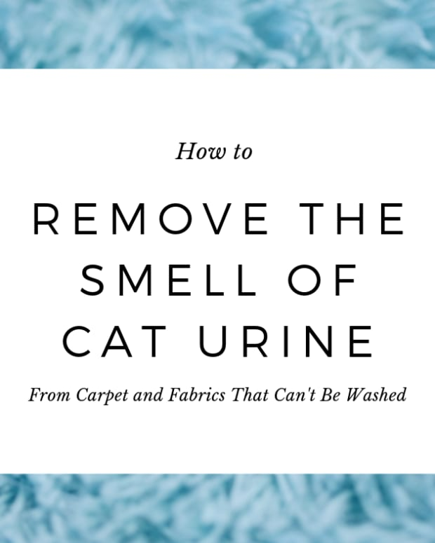 how-to-remove-cat-urine-smell