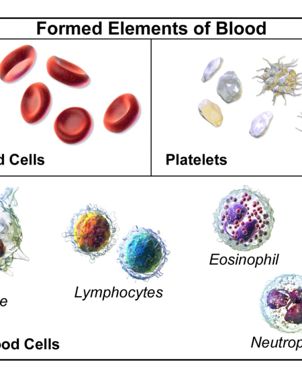 thrombocytopenia-platelets-and-bleeding