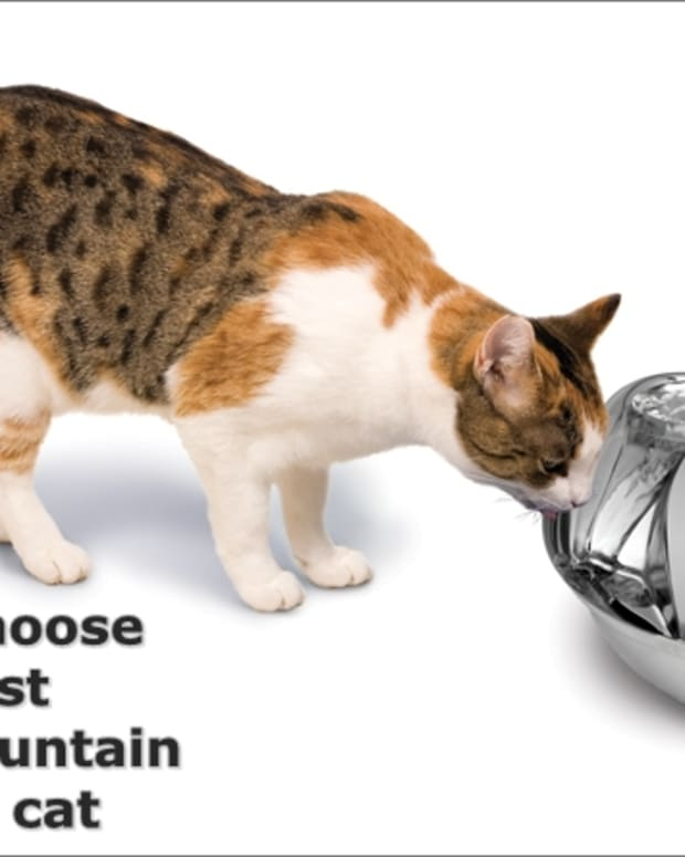 cat-fountain