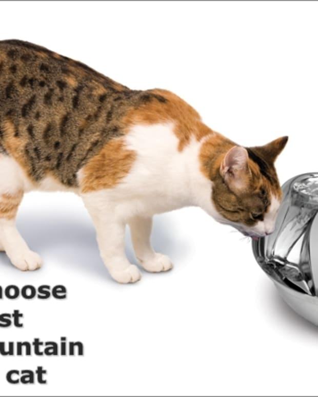 cat-fountain