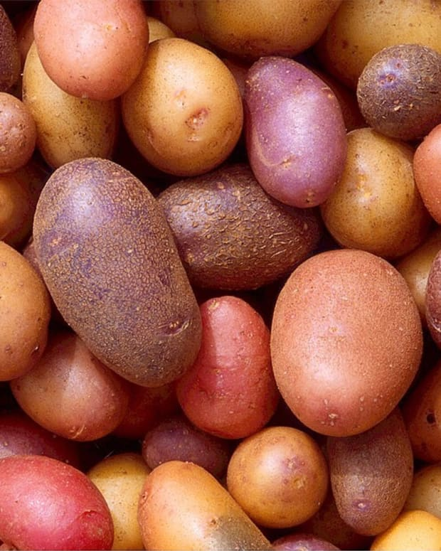 solanine-green-potatoes-and-arthritis