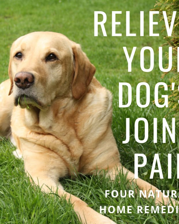 natural-remedies-for-your-dogs-joint-problems