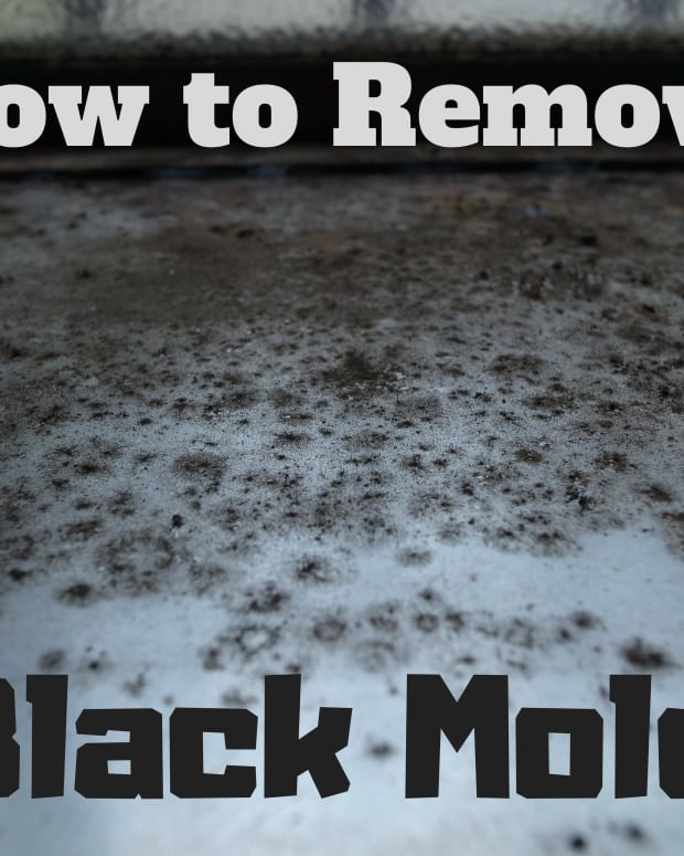 what-you-should-know-about-black-mold-removal