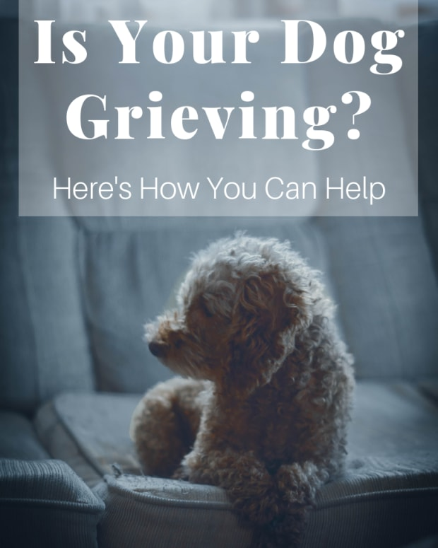 when-a-dogs-owner-dies-grieving-dogs