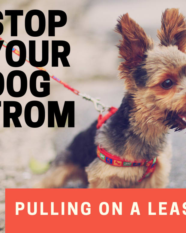 how-to-stop-a-dog-from-pulling-on-the-leash