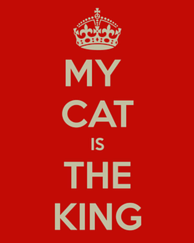 77-cat-proverbs-and-sayings