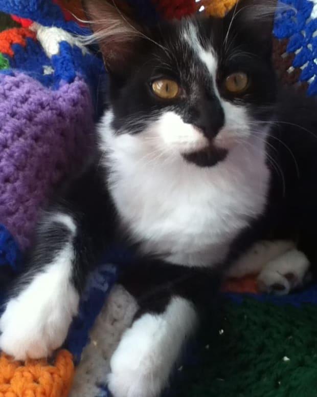 keep-your-indoor-cat-happy-and-healthy