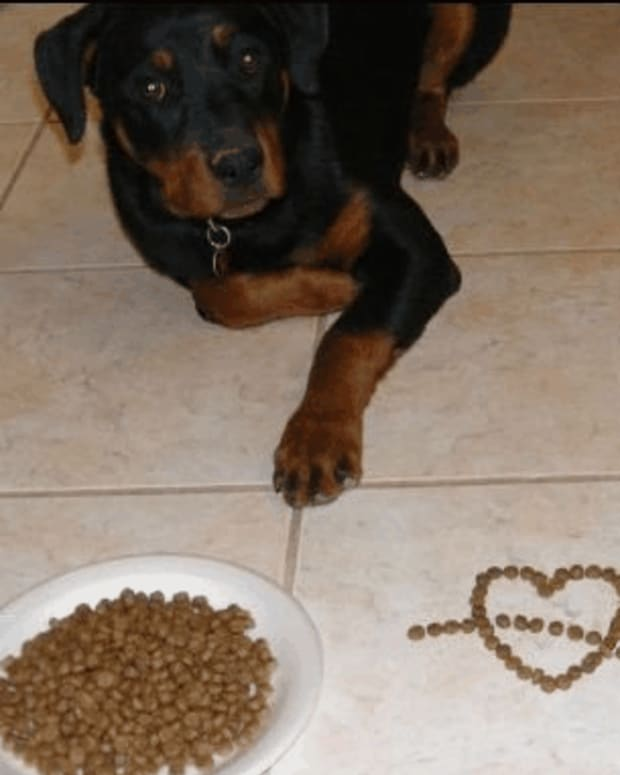 high-value-training-treats-for-dogs