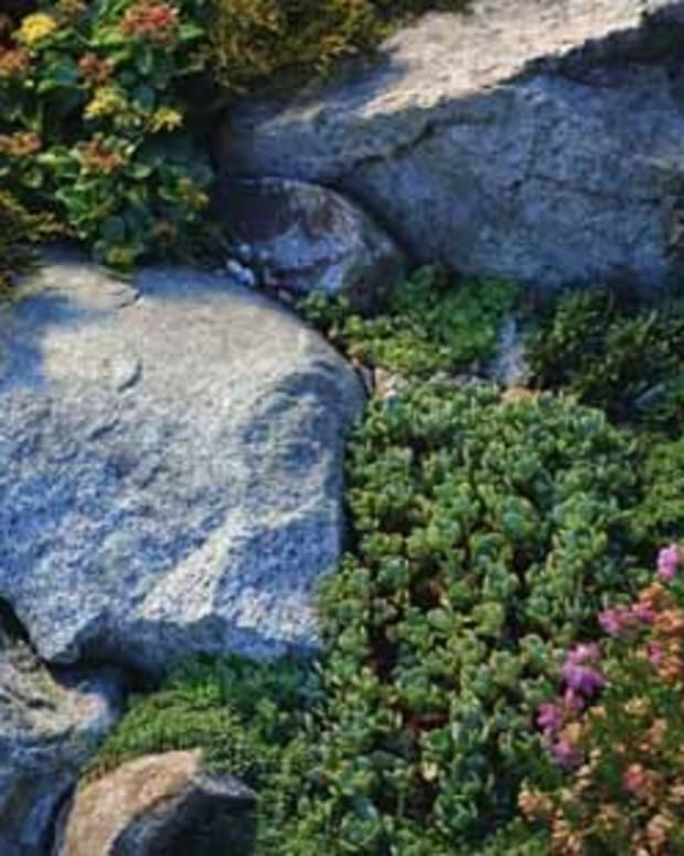 good-plants-and-erosion-controls-for-slopes