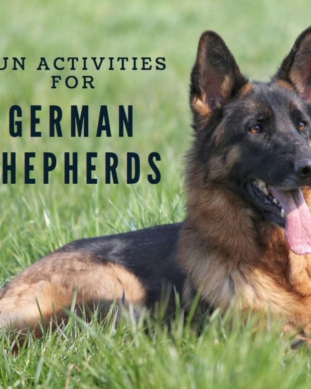 fun-german-shepherd-activities