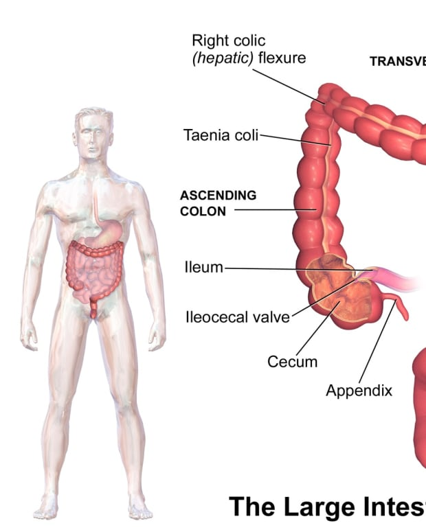 human-intestinal-flora-and-fecal-transplantation