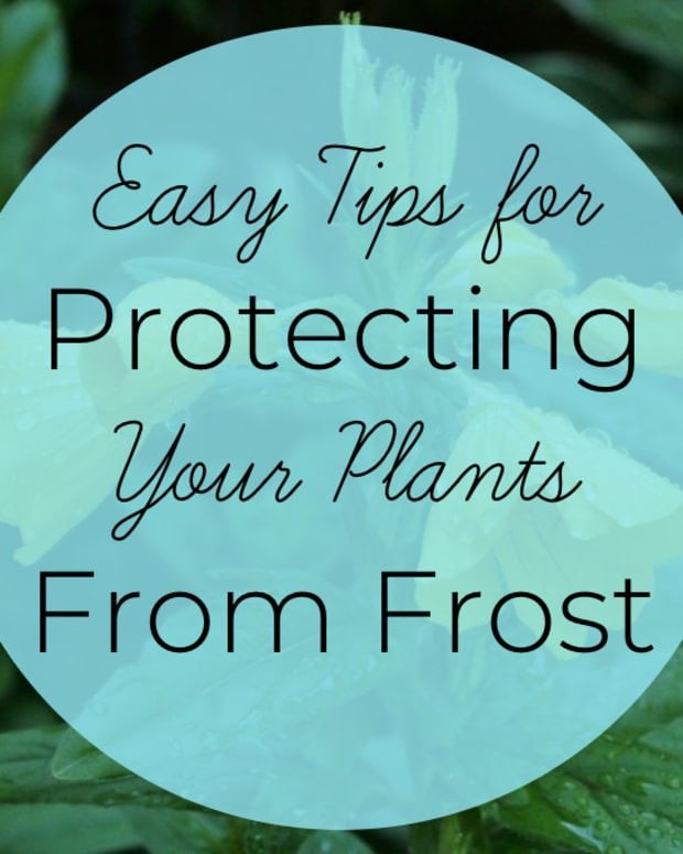 protecting-plants-from-spring-frosts