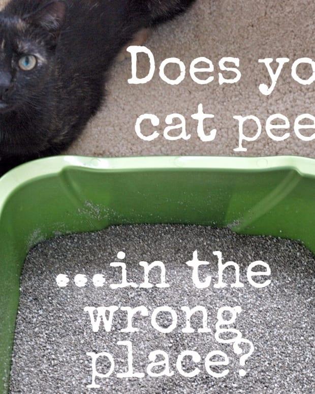 get-rid-of-cat-urine-and-dog-pee-odor