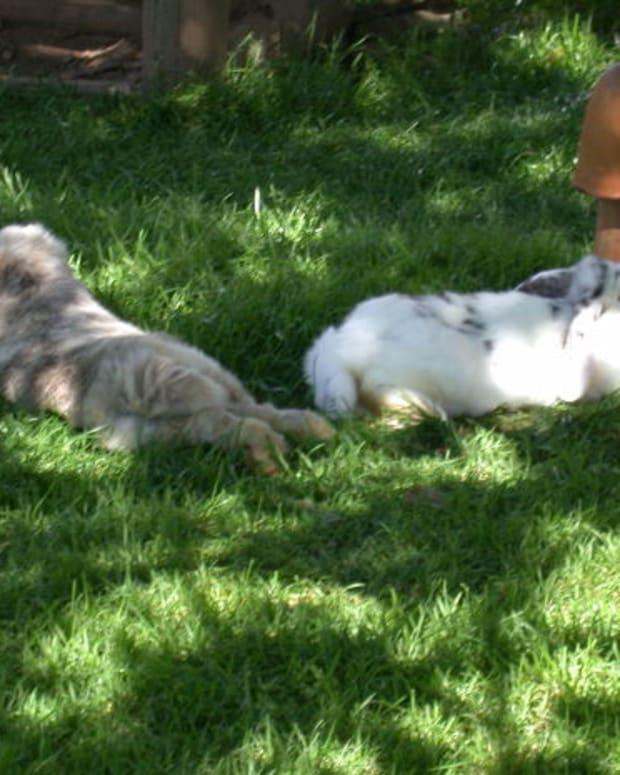 sleeping-rabbit