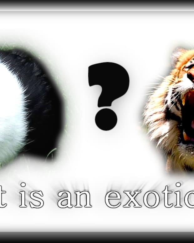 exoticpetissues