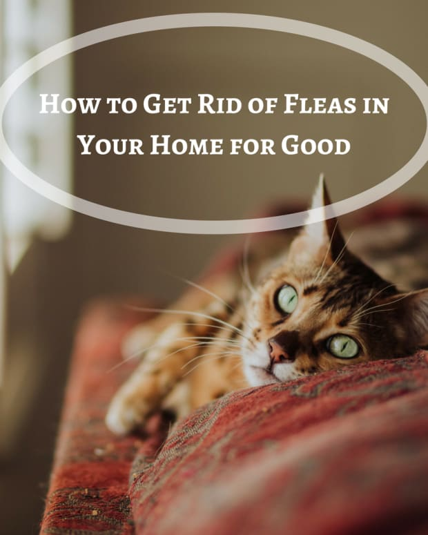 how-to-get-rid-of-fleas-for-good