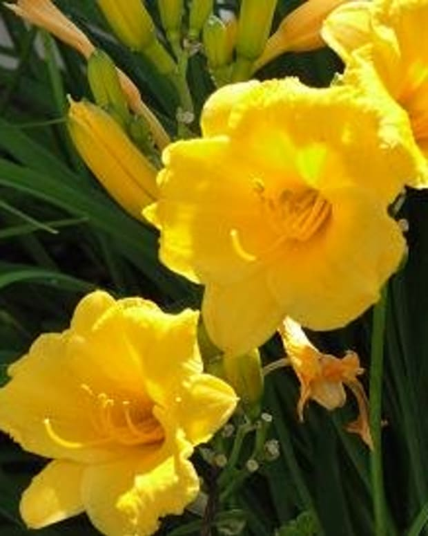 5-low-maintenance-plants-that-should-be-in-your-landscape