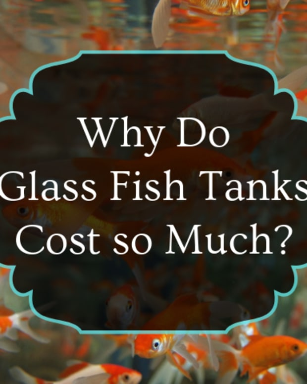 why-are-glass-aquariums-so-expensive