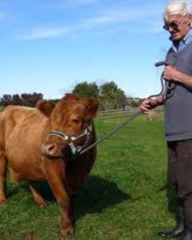 small-livestock-animals
