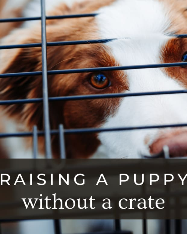 can-you-raise-a-puppy-without-a-crate