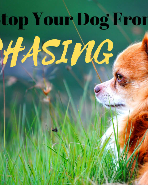 how-to-strop-a-dog-from-attacking-birds-cats-chicken-squirrels-and-all-the-like