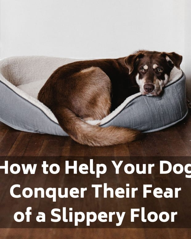 why-is-my-dog-suddenly-scare-of-the-slippery-floor